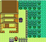 Pokemon XY: Naturia Screenshot