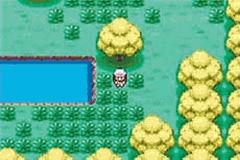 Pokemon Malosse Challenge Screenshot