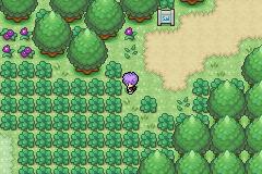 Pokemon Suri Screenshot